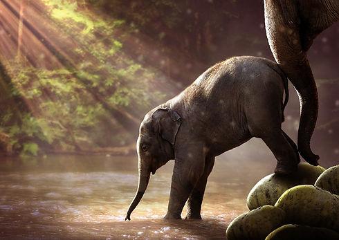 elephant-duwtje in de rug.jpg