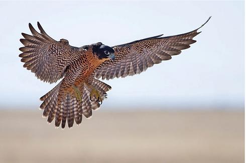 BirdmanRebird.png