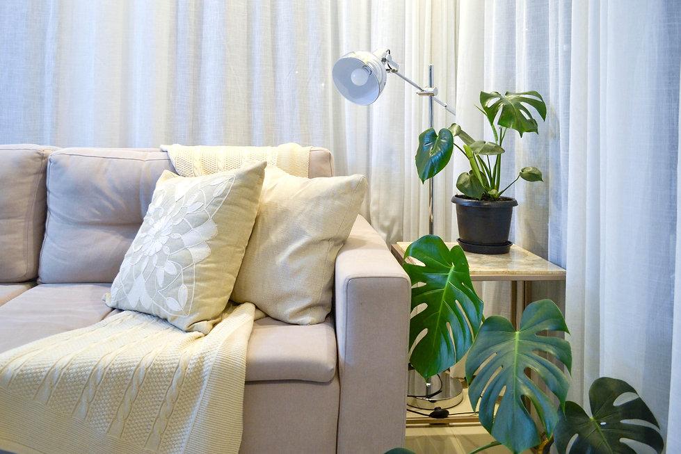 Plantas em casa 2.jpg