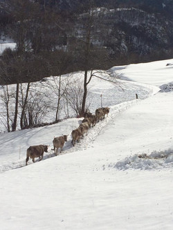 Uscita invernale/Winterauslauf