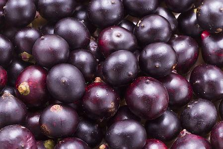 berries_c7884b2b-eaf3-4c5f-ae1b-29827ba2