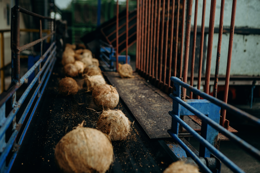 The coconuts used to produce our coconut milk / cream powder are harvested between the ages of 11-13 months