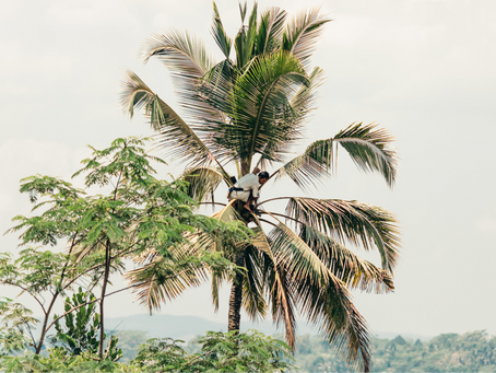 Is Coconut Milk Better for the Environment?