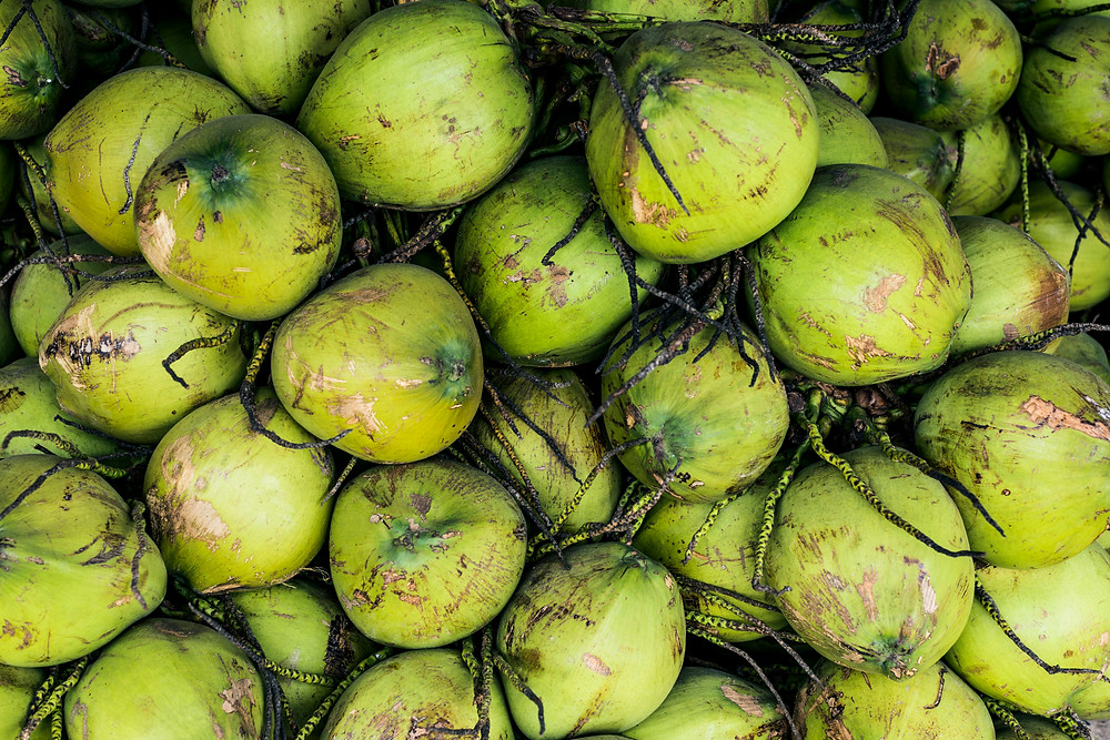 Young green coconuts, aged 6-9 months, which typically are the producers of coconut water.