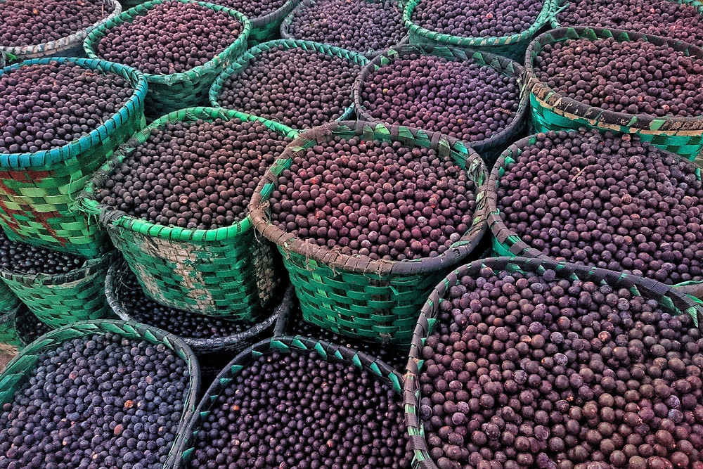 baskets of just-harvested acai berries