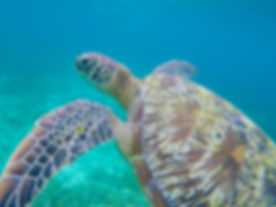 Snorkel and turtle Cayman Islands Barrier Reef private boat charter