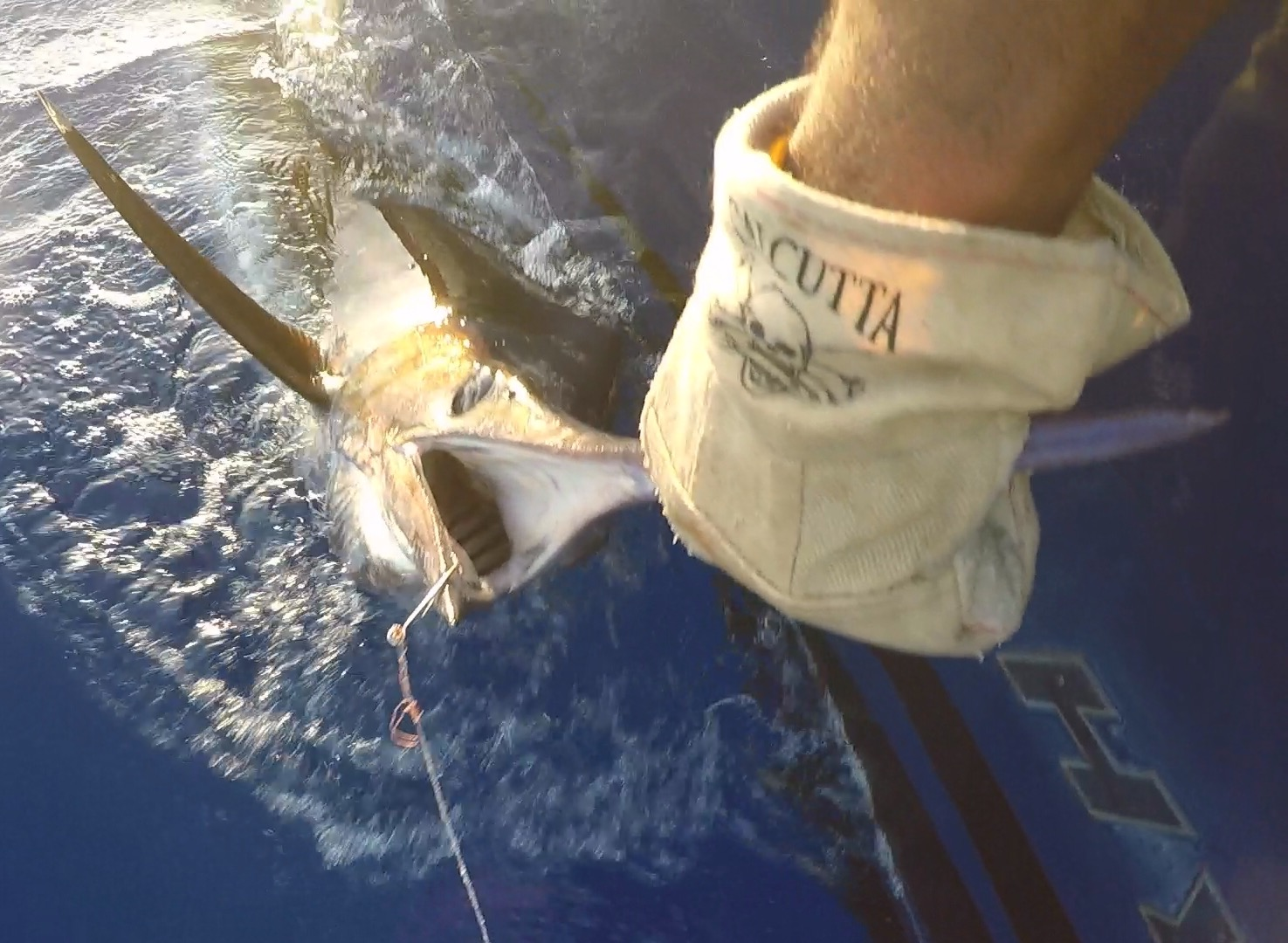 Marlin catch closeup