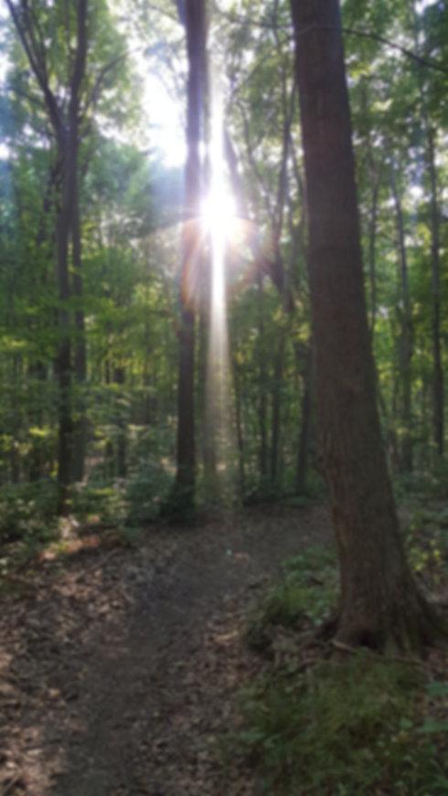 lightinwoods.jpg