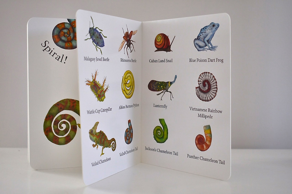 Spot, Spike, Spiral by Sarah Grace Tuttle with illustrations by Miriam Nerlove