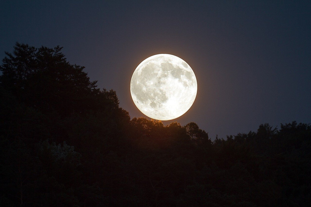 Full Moon in night sky over forest
