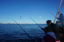 Go2Lofoten Fisketur 6.jpg