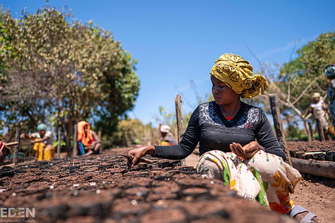 Photo of Sri Lankan woman tending saplings for reforestation project