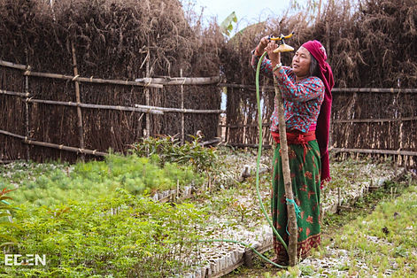 Photo of Nepalese woman watering saplings for eden reforestation project