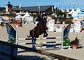 kinésiologie animale, kinésiologie pour chevaux et cavalier, améliorer sa relation avec son cheval, cheval difficile