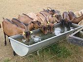kinesiologie animale, animaux d'élevage, animaux de la ferme