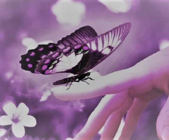 Butterfly on finger.PNG