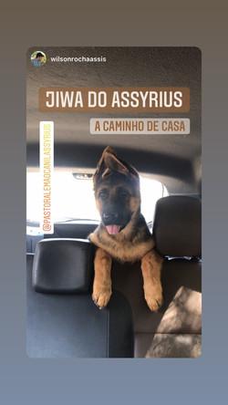 Jiwa do Assyrius a caminho da sua nova c