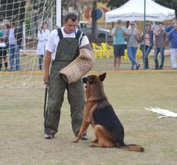 Proteção do cão czibor do Assyrius sieger 2014