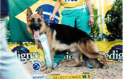 VA5 Sieger Argentina Cimbo do Assyrius