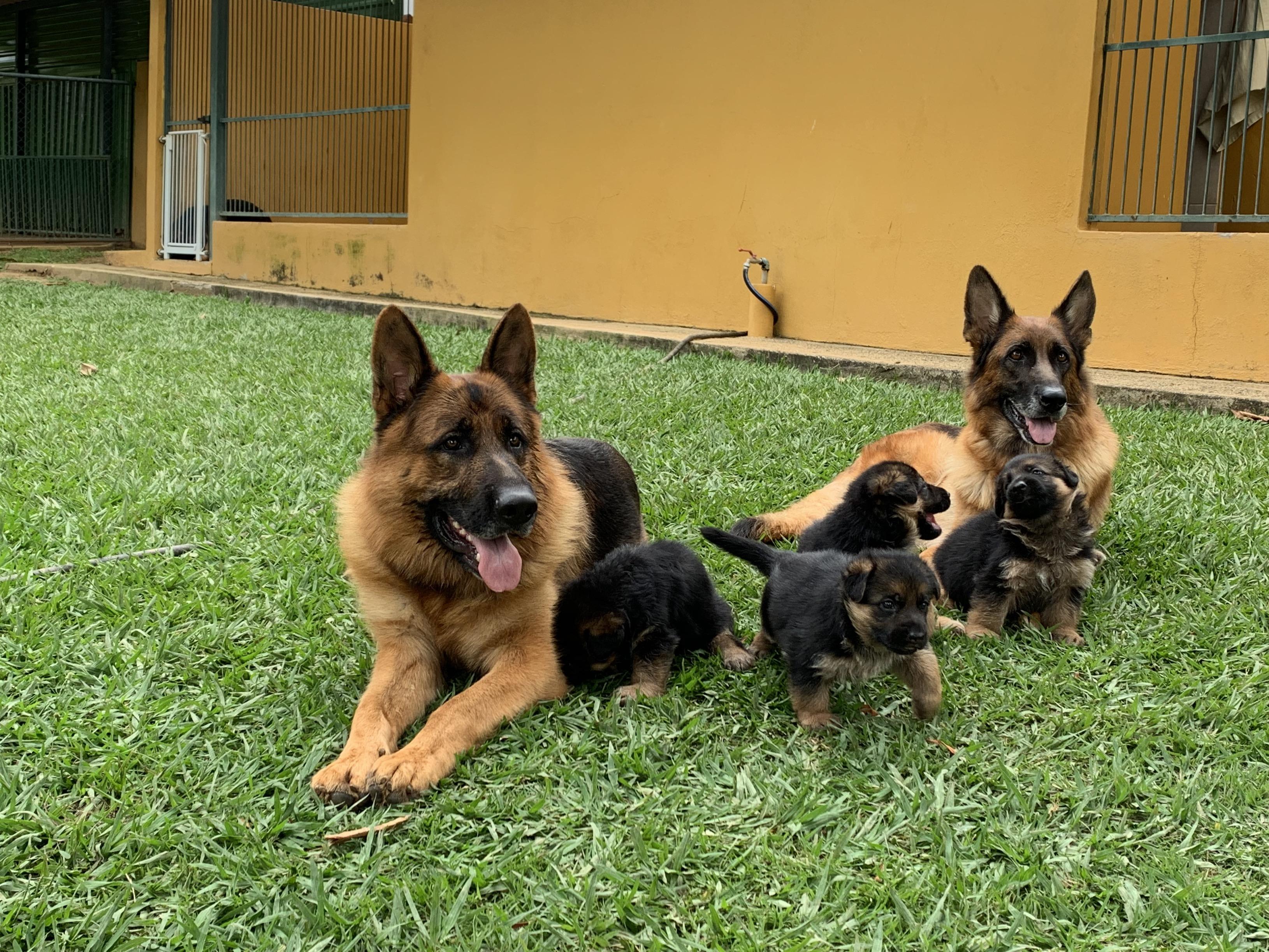 Família reunida_ pai, mãe e filhotes