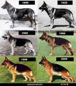 Evolução da Raça