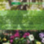 Orchideros.jpg