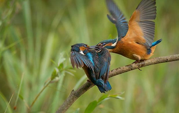 Birdwatching na Pateira
