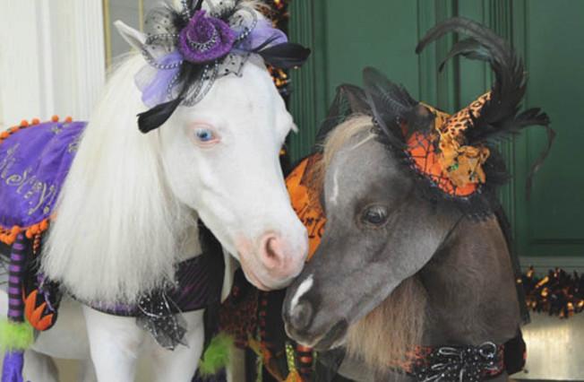 Holiday Halloween Pony Club