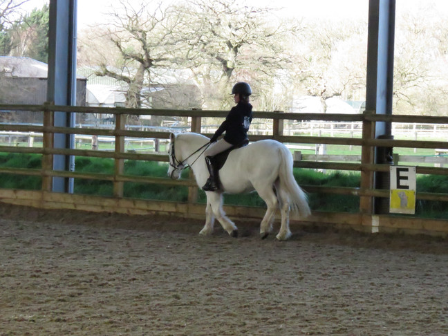 Dressage Training with Sarah Edwards