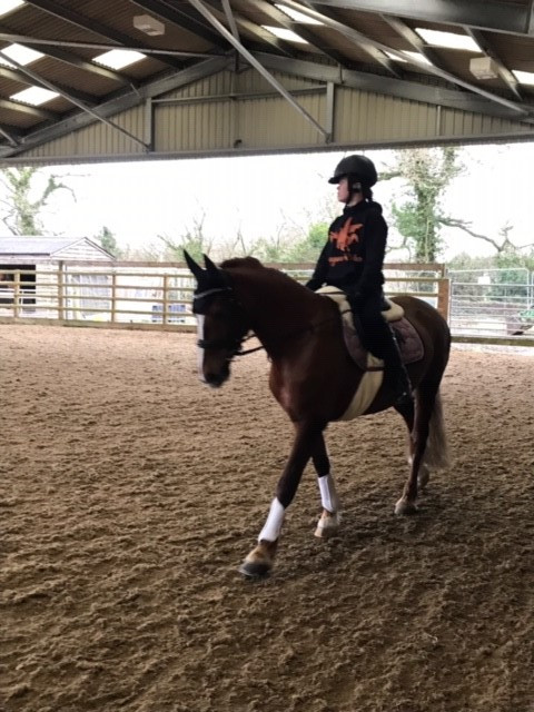 Regions join for a Dressage Training Day