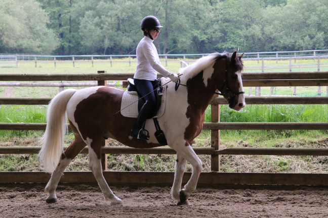 North West Dressage Training