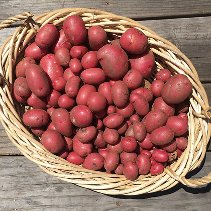 Potatoes: Red
