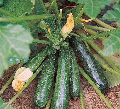Zucchini (per lb.)