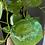 Thumbnail: slimeball