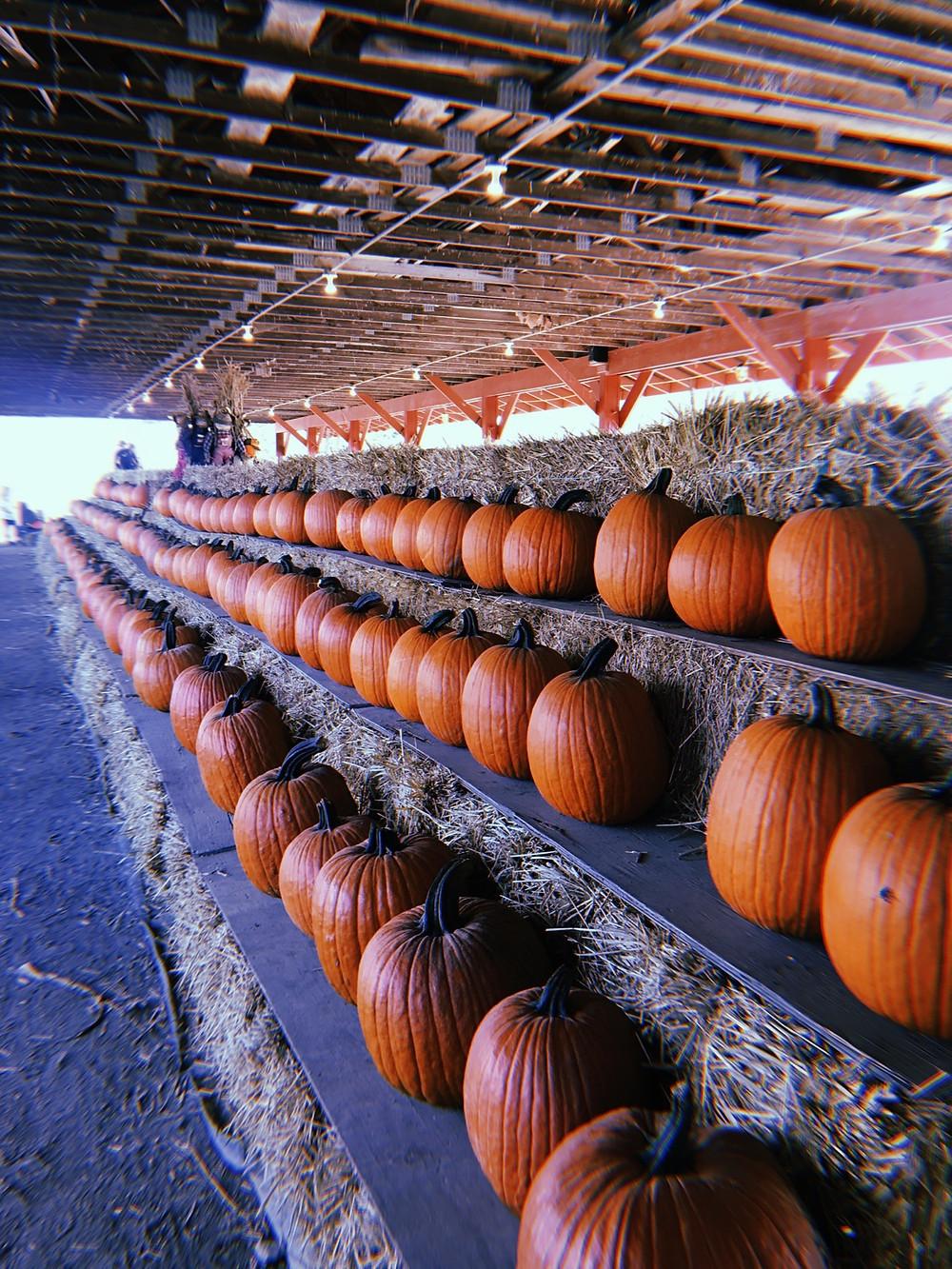 Pumpkins at Wallkill View Farm Stand in New Paltz, NY
