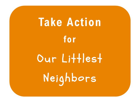 Take Action for Our Littlest Neighbors - About Infant Hunger