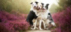 """ООО ТМ """"Весна"""" зоотовары купить оптом недорого у производителя в Украине доставка миски поилки кормушки"""