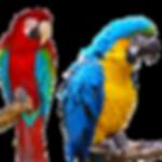 Товары для попугаев купить недорого оптом у производителя Весна ООО в Украине