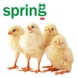 Кормушки и поилки для утят и цыплят купить недорого оптом у производителя Весна ООО в Украине