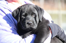 PuppiesMar5 052