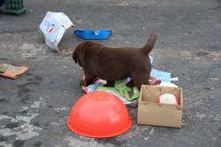 PuppiesFeb20Weekend 163