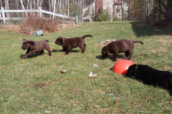 PuppiesFeb28 009