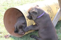 PuppiesFeb28 039