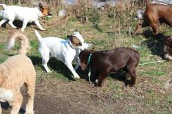 PuppiesApril6 011