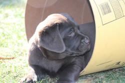 PuppiesFeb28 044