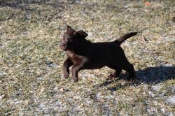 PuppiesMar5 042