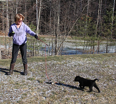 Puppy havng individual time. beginning training