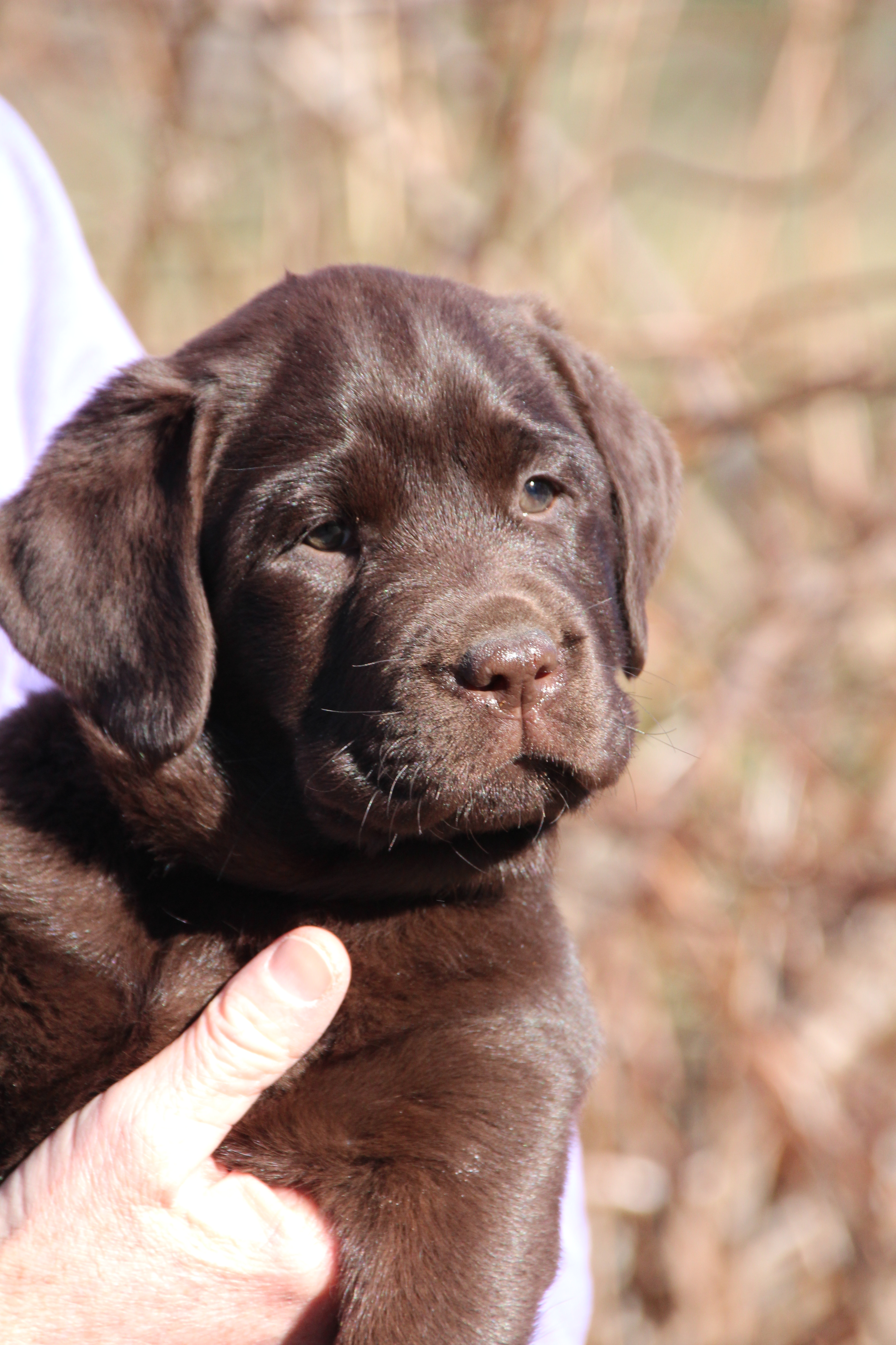 PuppiesMar6 122