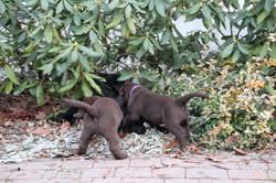 PuppiesFeb28 101