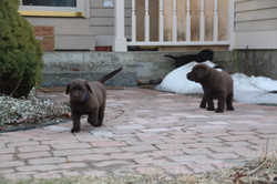 PuppiesFeb28 074